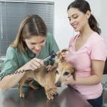 ici - Your Guide to a Career as a Veterinary Nurse or Assistant
